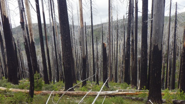 The Kalmiopsis WIlderness - 10 years after the Biscuit Fire